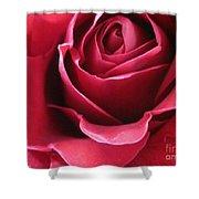 Wine Rose 6 Shower Curtain