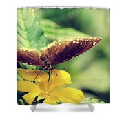 Wing Check Shower Curtain