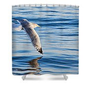 Wing Dipping Shower Curtain