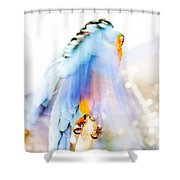 Wing Dream Shower Curtain