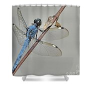 Wing Man Shower Curtain