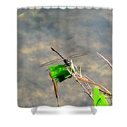 Winged Critter Shower Curtain