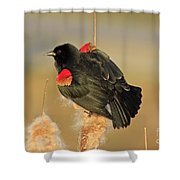 Wings In A Golden Light 2 Shower Curtain