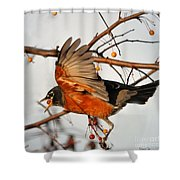 Wings Of A Robin Shower Curtain