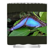 Wings Of Beauty Shower Curtain