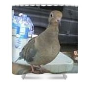 Wings Of Doves Shower Curtain