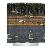 Wings Over Water 2 Shower Curtain