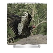 Wings Up Shower Curtain