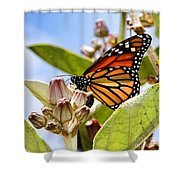 Wings Up Monarch Butterfly By Diana Sainz Shower Curtain