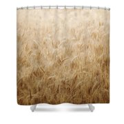 Winsome Wheat Shower Curtain by Amy Tyler