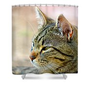 Winston 7 Shower Curtain