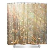 Winter Arbor Light Shower Curtain