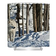Winter Arctic Wolf Shower Curtain