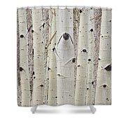 Winter Aspen Tree Forest Portrait Shower Curtain