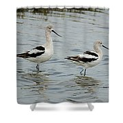 Winter Avocets Shower Curtain