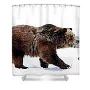 Winter Bear Walk Shower Curtain