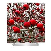 Winter Berryscape Shower Curtain