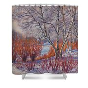 Winter Birches And Red Willows 1 Shower Curtain