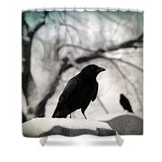 Winter Blackbirds Shower Curtain