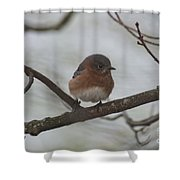 Winter Blue Bird 1 Shower Curtain