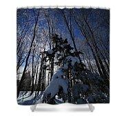 Winter Blue Shower Curtain by Karol Livote