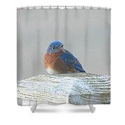 Winter Bluebird Shower Curtain