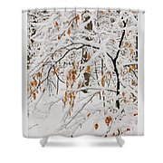 Winter Branches Shower Curtain