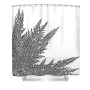 Winter Branches By Jammer Shower Curtain
