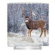 Winter Buck Shower Curtain by Darren  White