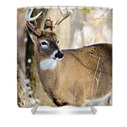 Winter Buck Shower Curtain by Steven Santamour