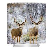 Winter Bucks Shower Curtain