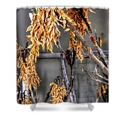 Winter Foliage Old House 13126 Shower Curtain