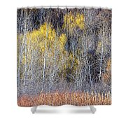 Winter Forest Landscape With Bare Trees Shower Curtain