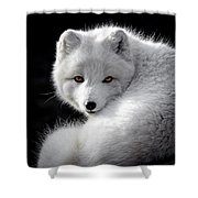 Winter Fox Shower Curtain