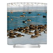 Winter Geese - 05 Shower Curtain