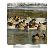 Winter Geese - 06 Shower Curtain