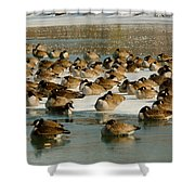 Winter Geese - 07 Shower Curtain