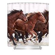 Winter Hardened Wild Horses Shower Curtain