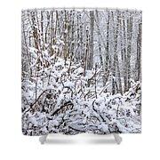 Winter Haven 2 Shower Curtain