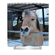 Winter Horse Shower Curtain