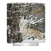 Winter Howl Shower Curtain