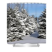 Winter In The Pines Shower Curtain