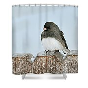 Winter Junco Shower Curtain