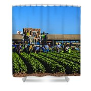Winter Lettuce Harvest Shower Curtain by Robert Bales