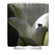 Winter Lily Shower Curtain