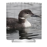 Winter Loon Shower Curtain