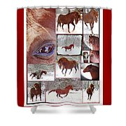Winter Moments- With The Flashy Paso Fino Stallion Shower Curtain
