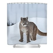 Winter Mountain Lion  Shower Curtain