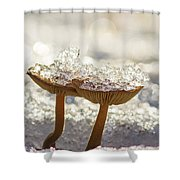 Winter Mushrooms Shower Curtain
