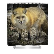 Winter Nature At Howell Nature Center Shower Curtain